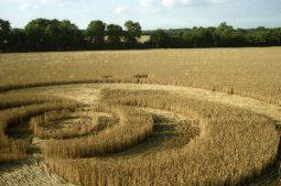 Exton, Hampshire | 21st  July 1995 | Wheat | P2 35mm Neg Scan