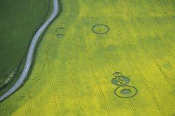 Quidhampton, Hampshire | 11th May 1995 | Oilseed Rape | L 35mm Neg Scan