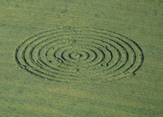 Bratton Castle, Wiltshire | 6th June 1995 | Barley | OH 35mm Neg Scan