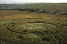 Telegraph Hill, nr Winchester, Hampshire | 12th June 1995 | Barley | P 35mm Neg Scan