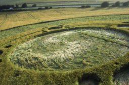 Telegraph Hill, nr Winchester, Hampshire | 12th June 1995 | Barley | P2 35mm Neg Scan