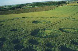 Bishops Sutton, Hampshire | 20th June 1995 | Wheat | P 35mm Neg Scan