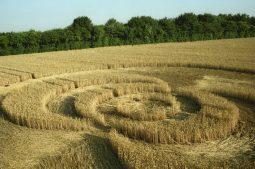 Exton, Hampshire | 21st  July 1995 | Wheat | P 35mm Neg Scan