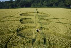 Henwood, Hampshire | 14th July 1997 | Wheat P 35mm