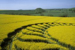 West Kennett Longbarrow, Wiltshire   4th May 1998   Oilseed Rape P2 35mm