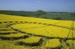 West Kennett Longbarrow, Wiltshire   4th May 1998   Oilseed Rape P 35mm