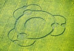 Goodworth Clatford (Bury Hill), Hampshire   10th May 1998   Oilseed Rape 35mm Neg