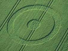 Chiseldon, Wiltshire   19th June 1998   Wheat 35mm
