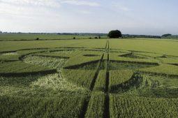 Avebury Trusloe, Wiltshire   20th June 1998   Barley P 35mm