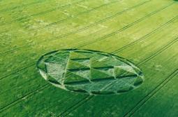 Silbury Hill, Wiltshire   12th June 2000   Barley  MFYB
