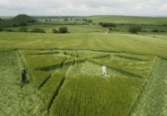 Silbury Hill, Wiltshire   12th June 2000   Barley  P 35mm