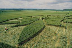 Milk Hill, Wiltshire   1st July 2000   Wheat P 35mm