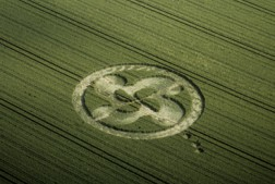 Honey St, Wiltshire   8th July 2000   Wheat L 35mm