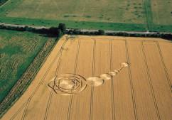 Uffington, Oxfordshire   22nd July 2000   Wheat  MFYB