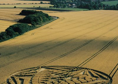 Allington Down, Wiltshire | 1st August 2000 | Wheat MFYB