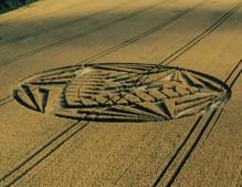 Allington Down, Wiltshire   1st August 2000   Wheat MFYB