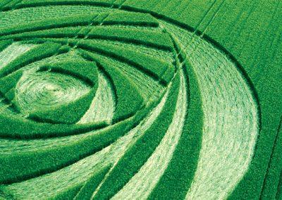 Berwick Bassett, Wiltshire   9th June 2001   Barley CL2 35mm