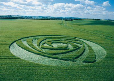 Berwick Bassett, Wiltshire | 9th June 2001 | Barley L2 MFYB