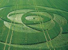 Liddington Castle, Wiltshire | 24th June 2001 | Wheat L MFYB