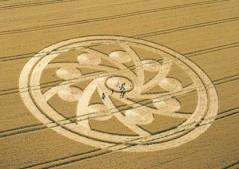 Woodborough Hill, Wiltshire | 10th August 2001 | Wheat L MFYB