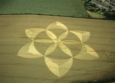 Englishcombe Nr Bath, Somerset | 12th August 2001 | Wheat  MFYB