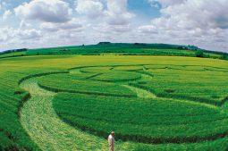 Windmill Hill, Wiltshire | 6th June 2003 | Wheat  P 35mm
