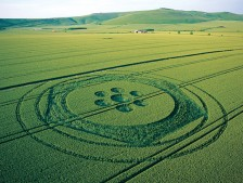 Stanton St Bernard, Wiltshire | 15th June 2003 | Wheat MF