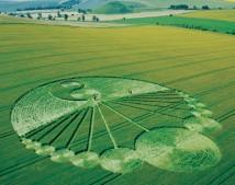 Waden Hill, Wiltshire | 21st June 2003 | Wheat L2 MF
