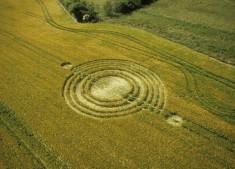 Windmill Hill, Wiltshire | 19th June 2003 | Wheat L 35mm