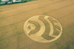 Woodborough Hill, Wiltshire | 14th July 2003 | Wheat L MF