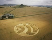 Woodborough Hill, Wiltshire| 14th July 2003 | Wheat L2 35mm