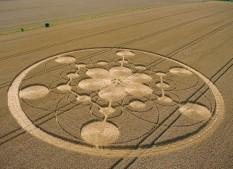 Chisbury, Wiltshire | 22nd July 2003 | Wheat MFL