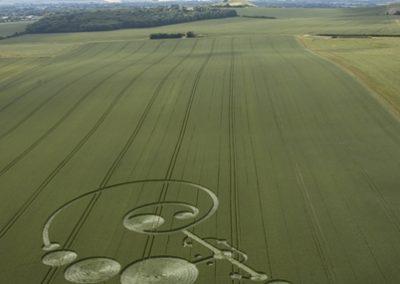 East Field Alton Barnes, Wiltshire | 20th June 2004 | Wheat  L2