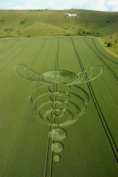 Milk Hill Alton Barnes, Wiltshire | 26th June 2004 | Wheat  L