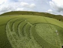 Milk Hill Alton Barnes, Wiltshire   26th June 2004   Wheat P3