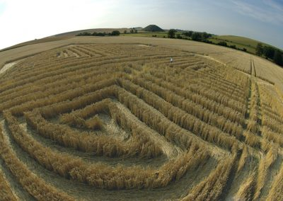 West Kennett, Wiltshire| 30th July 2004 | Wheat P