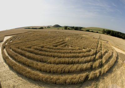 West Kennett, Wiltshire | 30th July 2004 | Wheat  P2