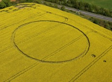 Bishops Sutton, Hampshire | 3rd May 2005 | Oilseed Rape