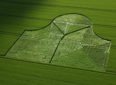Stanton St Bernard, Wiltshire | 29th May 2005 | Barley