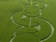 Beckhampton, Wiltshire | 5th June 2005 | Barley L
