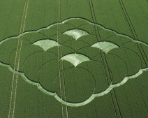 Monkton Down, Wiltshire | 20th June 2005 | Wheat