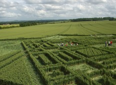 East Field Alton Barnes,  Wiltshire | 3rd July 2005 | Wheat P