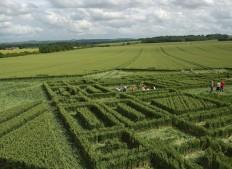 East Field Alton Barnes,  Wiltshire | 3rd July 2005 | Wheat P