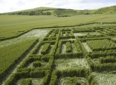 East Field Alton Barnes , Wiltshire | 3rd July 2005 | Wheat P2