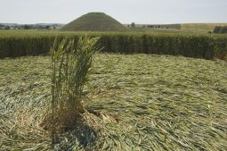 Silbury Hill, Wiltshire | 9th July 2005 | Wheat G