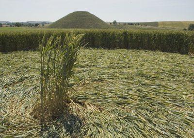 Silbury Hill, Wiltshire | 9th July 2005 | Wheat G