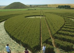Silbury Hill, Wiltshire | 9th July 2005 | Wheat P