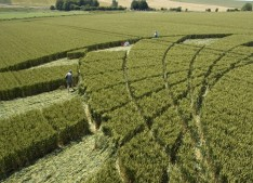 Silbury Hill, Wiltshire | 9th July 2005 | Wheat P3