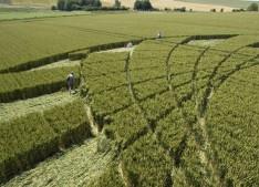 Silbury Hill, Wiltshire | 9th July 2005 | Wheat P3