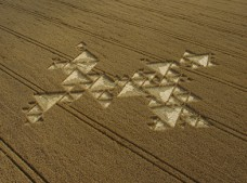 Savernake Forest,  Wiltshire| 19th July 2005 | Wheat L